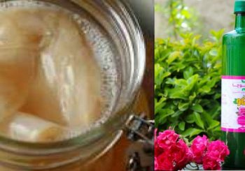 چای تخمیری و پروبیوتی کامبوچا