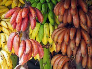 Pakistan Develops 'Two Unique Varieties' Of Banana